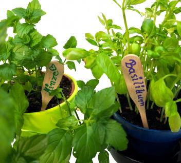 Pflanzschild aus feinem Buchenholz - ideal für Ihren Garten - Vorschau 2