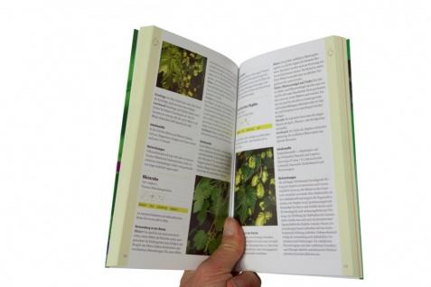 Essbare Wildpflanzen: 200 Arten bestimmen und verwenden - Vorschau 2