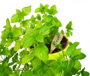 Pflanzschild aus feinem Buchenholz - ideal für Ihren Garten - Vorschau 5