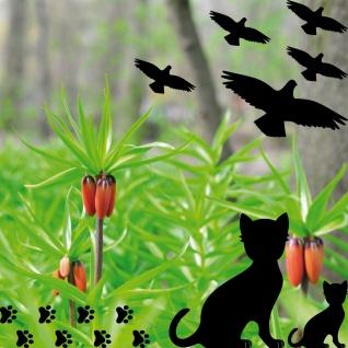 Set Warnvögel Kätzchen Pfötchen Fenster Glas Scheibe Schutz Deko Folie Aufkleber