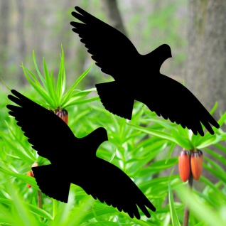 Warnvögel 20cm schwarz Habicht Vögel Warnvogel Aufkleber Vogel Fenster Schutz