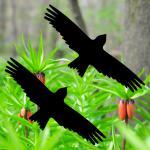 2 Aufkleber Milan 20cm schwarz Vogel Fenster Warnvögel Vogelschutz Vogelschreck