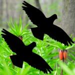 Aufkleber Warnvogel 25cm Tattoo Habicht Fenster Vogel Glas Schutz Deko Folie