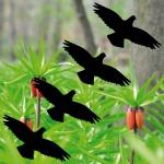 4 Aufkleber 10cm schw Habicht Vogel Fenster Warnvögel Vogelschutz Vogelschreck