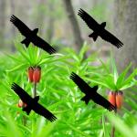 Warnvögel 10cm schwarz Milan Warnvogel Aufkleber Vogel Fenster Scheibe Schutz