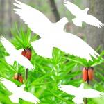 Warnvogel Set weiß Habicht Vogel Vögel Warnvögel Aufkleber Deko Fensterschutz