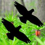 Warnvogel 20cm Habicht Aufkleber Tattoo Vogel Schreck Fenster Schutz Deko Folie