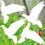 4 Aufkleber Tattoo 20cm weiß Tauben Vogel Warnvogel Fenster Wintergarten Balkon