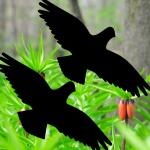 Aufkleber Warnvogel 40cm Tattoo Habicht Fenster Vogel Glas Schutz Deko Folie
