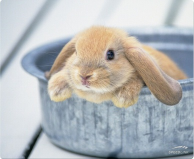 Speedlink SL-6242 Mouse-Pad Rabbit Maus-Pad Baby Hase Hasen für PC Notebook etc