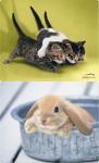 Speedlink 2x PACK Mousepad Cats + Rabbit Mauspad Motiv Baby Hase Katzen flach
