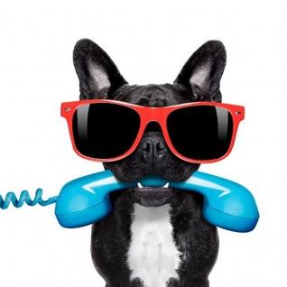 Leinwand Wandbild Leto 35x35 Motiv Calling dog
