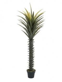 EUROPALMS Yuccapalme, Kunstpflanze, 165cm