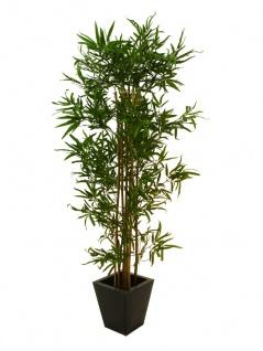 EUROPALMS Bambus Multistamm, 210cm