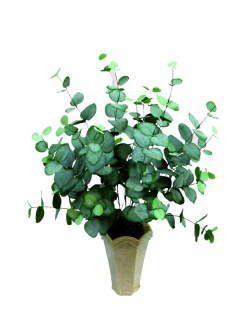 EUROPALMS Eukalyptusbusch, Kunstpflanze, 50cm