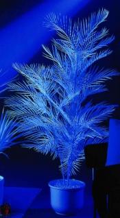 EUROPALMS Kentiapalme, künstlich, uv-weiß, 90cm