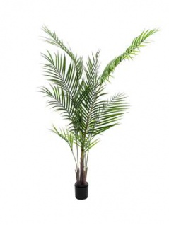 EUROPALMS Großblatt-Areca, Kunstpflanze, 165cm