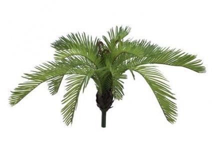 EUROPALMS Cycasfarn, Kunstpflanze, 50 cm