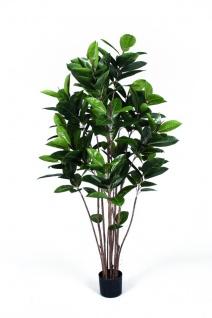EUROPALMS Gummibaum, Kunstpflanze, 150cm