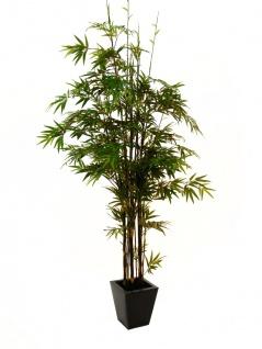 EUROPALMS Bambus Dunkelstamm, 240cm
