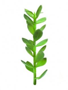 EUROPALMS Geldbäumchen-Spross, Kunstpflanze, 30cm