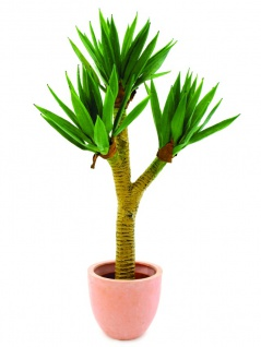 EUROPALMS Yuccapalmbusch, 105cm