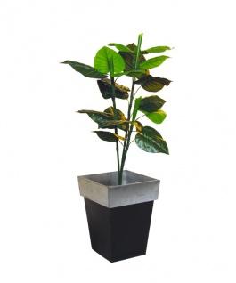 EUROPALMS Caladiumpflanze, 90cm