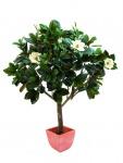 EUROPALMS Magnolienbaum, 150cm