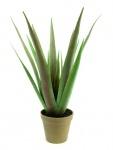 EUROPALMS Aloe-Vera Pflanze, 60cm