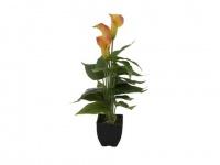 EUROPALMS Calla mini, gelb orange, 43cm