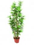 EUROPALMS Bambus mit dicken Naturstämmen, 150cm