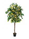 EUROPALMS Bougainvillea, gelb, 150cm