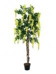 EUROPALMS Goldregenbaum, gelb, 150cm