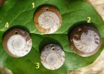 Anhänger Ammonit Kreis