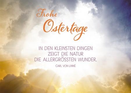Postkarte Frohe Ostertage (10 St) Sonnenstrahlen Carl von Linné Grußkarte