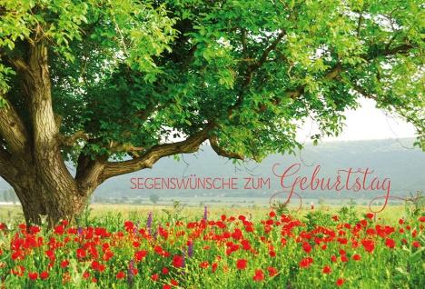 Glückwunschkarte Geburtstag Mohn-Blumen Psalm 6 St Kuvert Bibelwort Schöpfung