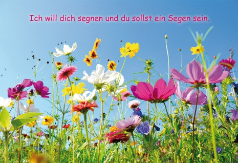 Grußkarte Bibelwort Mose 12, 3 Segen 6 St Kuvert Lutherbibel Blumen-Wiese Gott