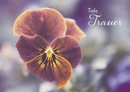 Trauerkarte Tiefe Trauer (6 St) Jesaja Lutherbibel Blume Grußkarte Kuvert