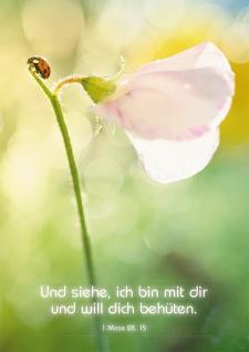 Postkarte Und siehe, ich bin mit dir (10 St) Marienkäfer auf Blume Lutherbibel