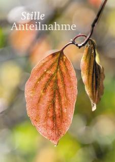 Trauerkarte Stille Anteilnahme farbiges Kuvert (6 St) Blätter Wassertropfen
