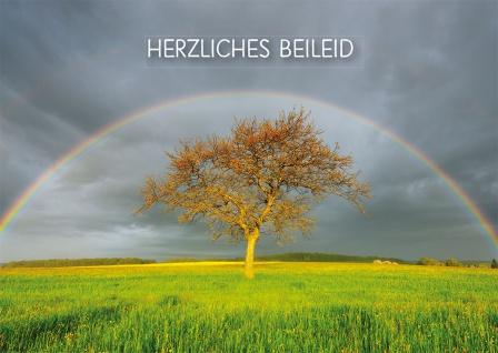 Trauerkarte Herzliches Beileid (6 Stück) Hebräer Bibelwort Grußkarte mit Kuvert