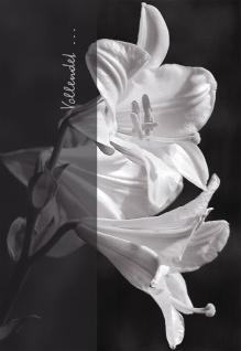 Trauerkarte Vollendet (6 St) Ruth Rau Lilien Grußkarte Kuvert