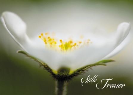 Trauerkarte Stille Trauer (6 St) Psalm Lutherbibel Blume Grußkarte Kuvert
