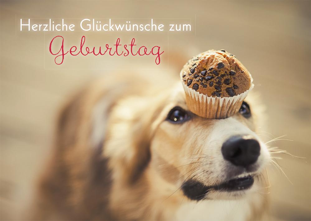 Geburtstagskarte Herzliche Gluckwunsche Hund 6 Stck Grusskarte