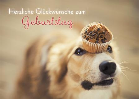 Geburtstagskarte Herzliche Glückwünsche Hund (6 Stck) Grusskarte Kuvert