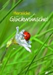 Glückwunschkarte Herzliche Glückwünsche! (10 St) Sinnspruch Grußkarte Postkarte