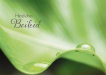 Trauerkarte Herzliches Beileid Psalm Lutherbibel (6 St) Grußkarte Kuvert