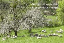 Klappkarte Bibelwort Psalm 23, 1 (6 Stck) Der Herr ist mein Hirte Grußkarte