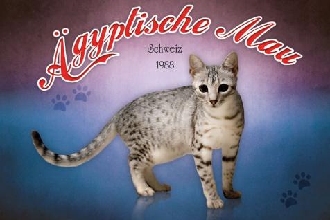 Schatzmix Blechschild Ägyptische Mau Schweiz 1988 Katze Metallschild 20x30 cm Wanddeko tin sign