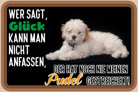 Blechschild Spruch Glück, Pudel Metallschild Wanddeko 20x30 cm tin sign